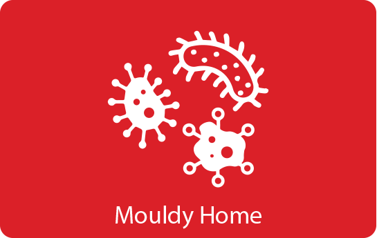 Mouldy Home